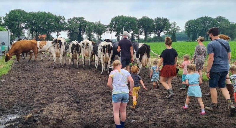 koeien-halen