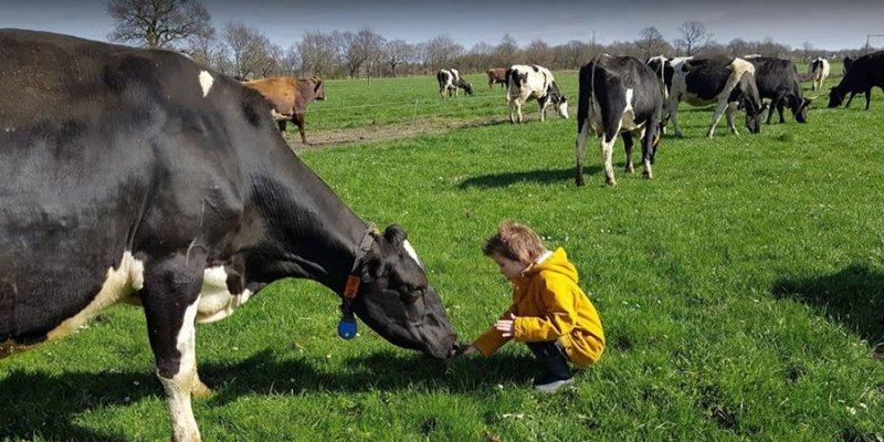 Kind-bij-koeien