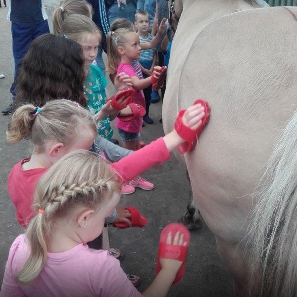 pony-kammen-boerderijcamping