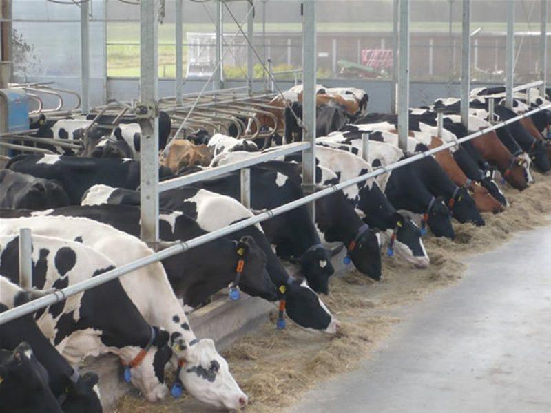 koeien-in-serrestal